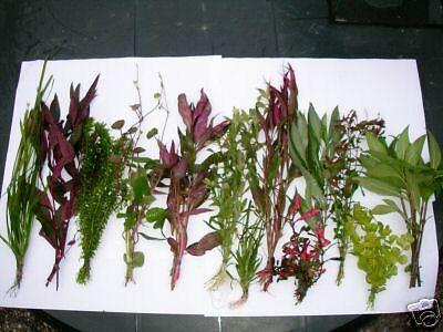lot de 13 touffes de plantes de culture pour aquarium 2